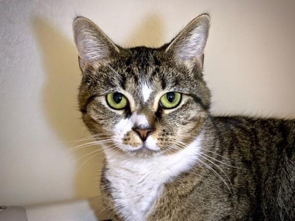 Animals at Our Shelter | Anne Arundel County, MD